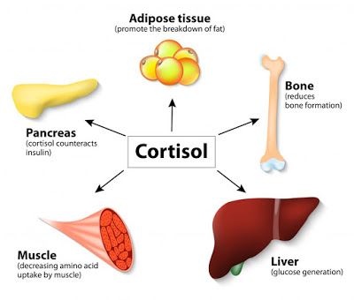 Strength Training's Effect on Cortisol Levels